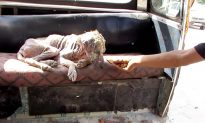 Stray Dog Turning Into 'Stone' Looked Like a 'Mummy' From Afar, Then a Miracle Happened