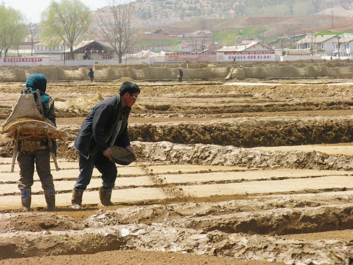 WFP Announces Slump In Donations Will Force Halt In Food Distributions In North Korea