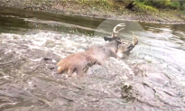 Father And Son Rescue 10-Point Buck