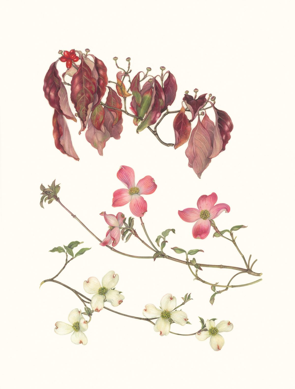 Pink and white flowers and red leaves