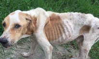 Neglected, Starving Dog Was Nearing Death, So Neighbors Decided to Do Something About It