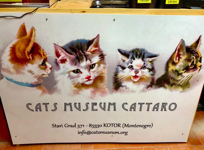 cats museum in kotor bay montenegro