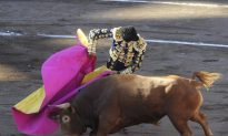 Video Shows Spanish Bullfighter Wiping Away Bull's Tears Before Killing It