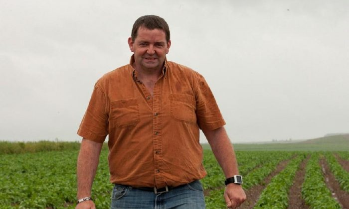 New Brunswick potato farmer Henk Tepper checks on his field, at his farm in Drummond, N.B. on June 26, 2012 . (Jacques Boissinot/The Canadian Press)