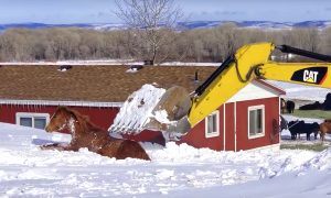 Video: Ingenious Rescuers Use Excavator to Save a Horse Stuck in Deep Snow