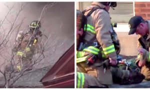 Video: Firefighters Pull Dog From Smoke-Filled House and Bring It Back to Life