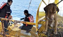 Exhausted Dog Swimming 135 Miles Out at Sea Gets Rescued, It's a Puzzle How It Got There