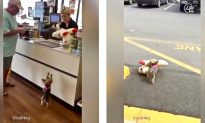 Video: Lucy the Yorkie Picks Toy That's Twice Her Size at Pet Store, Wins Hearts on the Internet