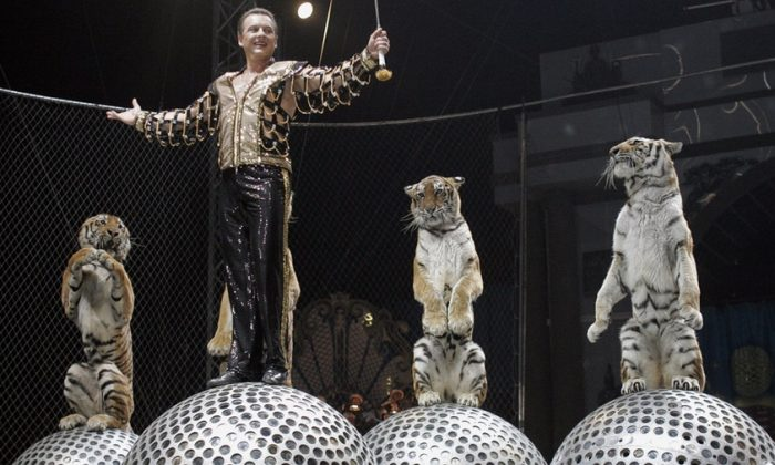 A circus show performance with tigers in Russia in a file photo. (Tatyana Makeyeva/AFP/Getty Images)