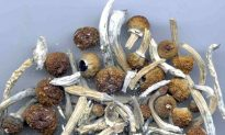 Denver Votes to Become First US City to Decriminalize 'Magic Mushrooms'
