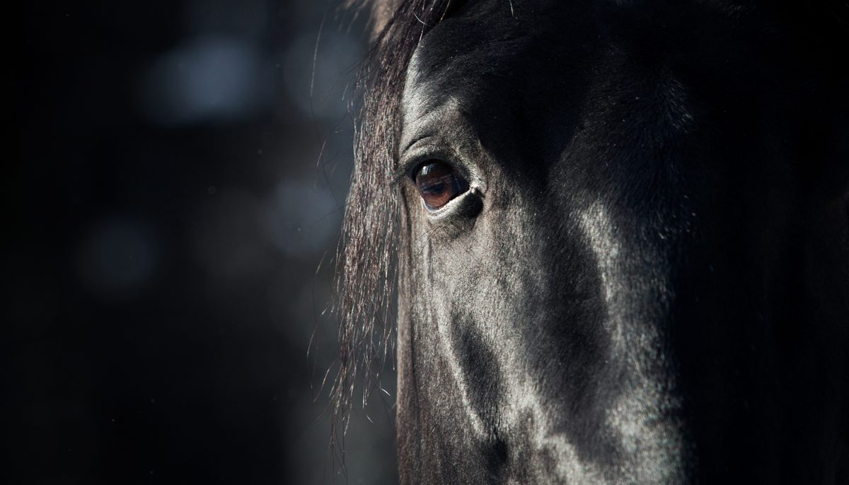 This Pitch-Black Horse Appears So Ordinary, but Wait Until He Turns His Head Around
