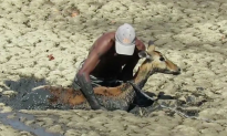 Video: Heroic Man Dives Into Mud to Rescue Impala at Zimbabwe National Park