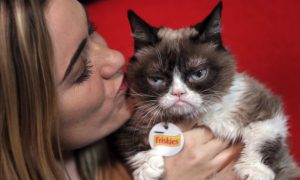 Internet Sensation Grumpy Cat Has Died Aged 7