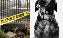 Multiple Dogs Found Killed, Tortured in Vermont, $1,000 Reward for Tips