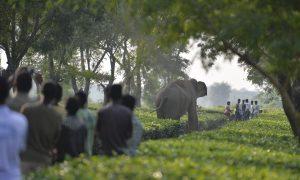 Elephant Kills Man After People Pelt Stones At Its Just Born Baby