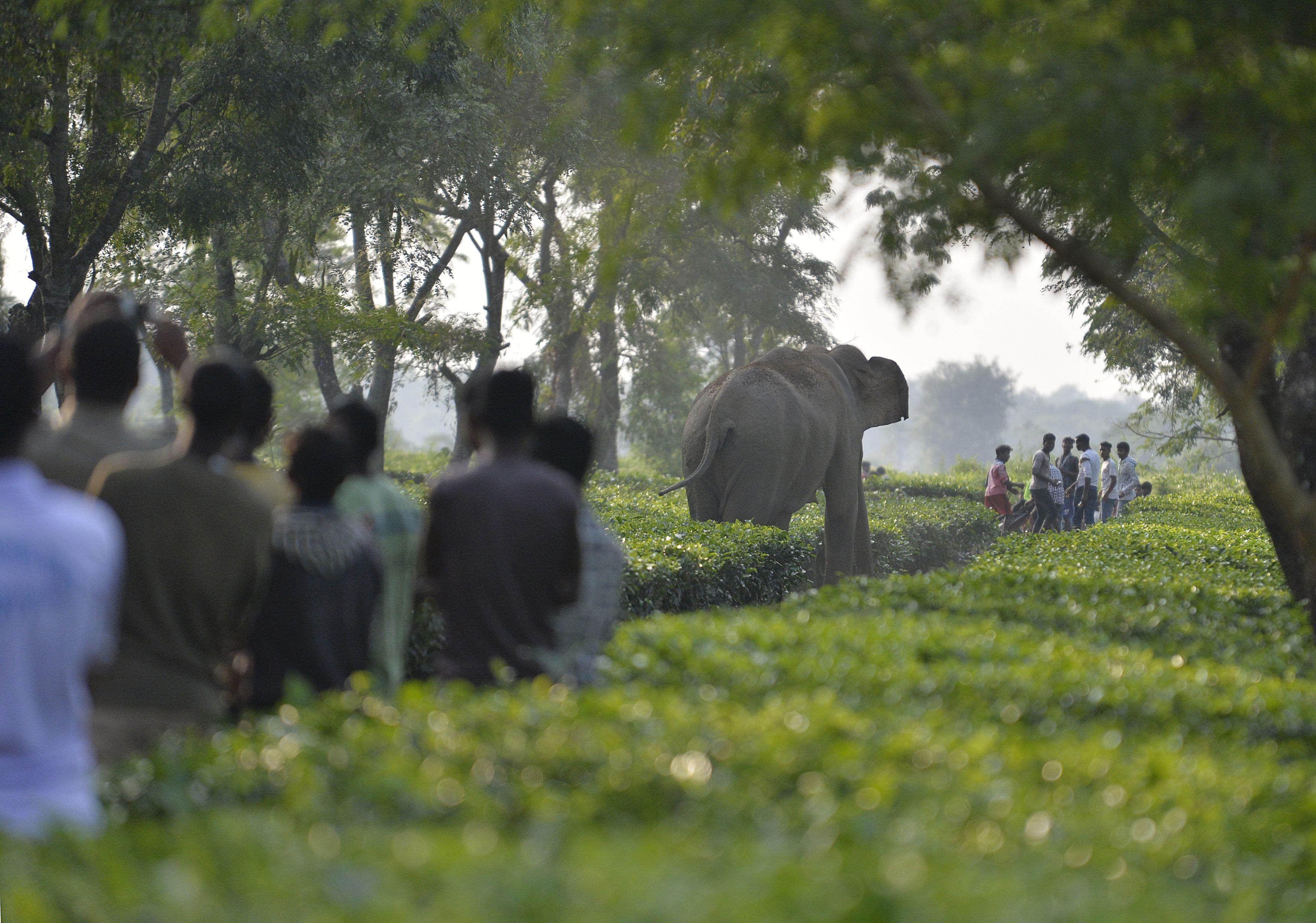 Elephant Kills Man After People Pelt Stones At Its Just Born Baby