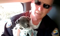 Video: Police Officers Save Freezing Puppy from the Brink of Death