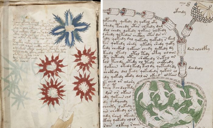 Two pages from the Voynich manuscript. (Public Domain/Wikimedia)