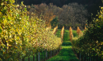 Hiking in the Vineyards of Vienna