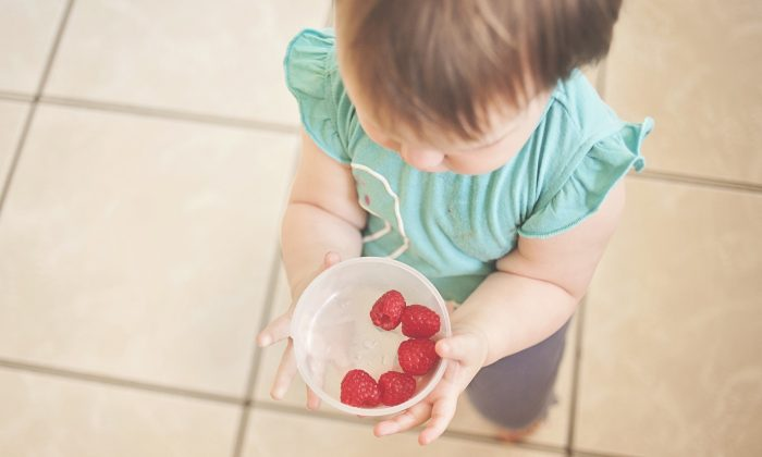 A toddler carries a bowl of raspberries. (Pixabay)