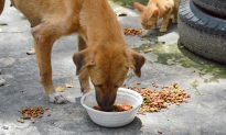 High-flying Bolivian Publicist Gives Up Career to Feed Stray Dogs Every Day