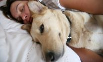 Woman Sleeps Overnight With Dying Dog So He Won't Be Alone: 'His Life Mattered'