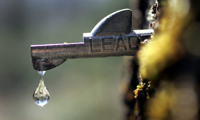 A drop of fresh sap falls from a tap in a maple tree in Bowdoin, Maine, on March 28, 2006. (Joe Raedle/Getty Images)