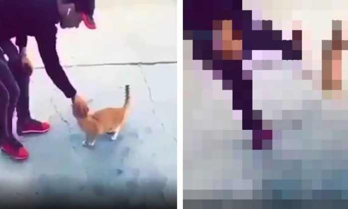 Animal rights activists are calling for the arrest of a man caught on video kicking a cat. (Twitter/Protect_Wildlife)