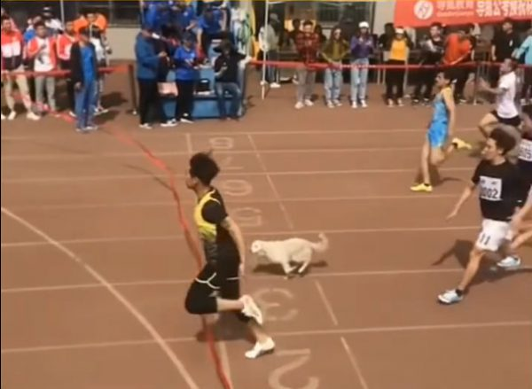 Dog join race