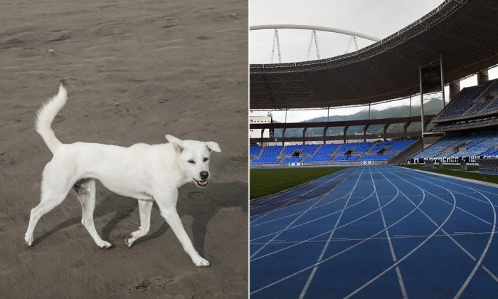 (L) A dog similar to the one in this race. (Agung Parameswara/Getty Images) | (R) An empty track. (Spencer Platt/Getty Images)