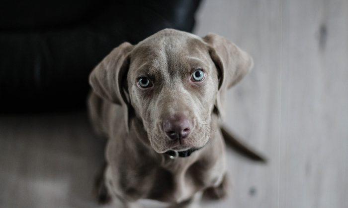 File photo of a dog. (Pixabay/CC0)
