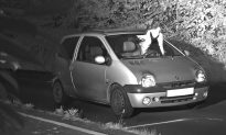 Pigeon's Perfect Timing Helps Save Driver From Speeding Fine