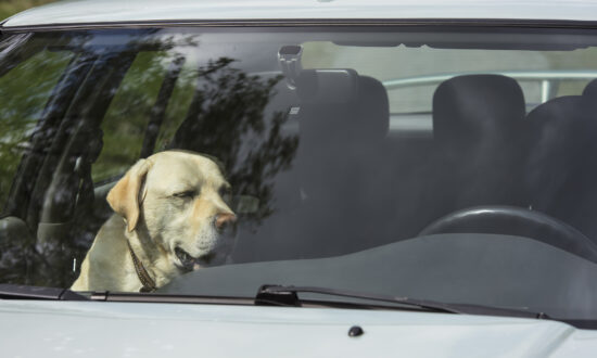 Officer Makes Woman Sit in Hot Car After She Locked Dog Inside With No Ventilation