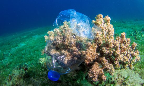 EU Voted for Complete Ban on Single-Use Plastics by 2021 to Keep Our Oceans Healthier