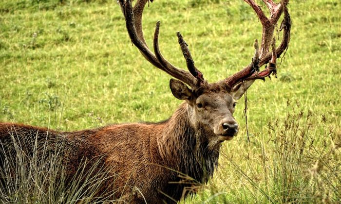 Stock image of a deer. (Antranias/Pixabay)