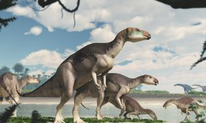 Dinosaur Herd Discovered in Australian Outback for First Time in History