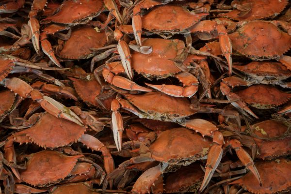 Cooked Blue Crabs (BRENDAN SMIALOWSKI/AFP/Getty Images)