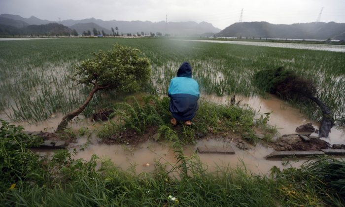 A man kneeling by a field in Zhejiang Province, China. (STR/AFP/Getty Images)