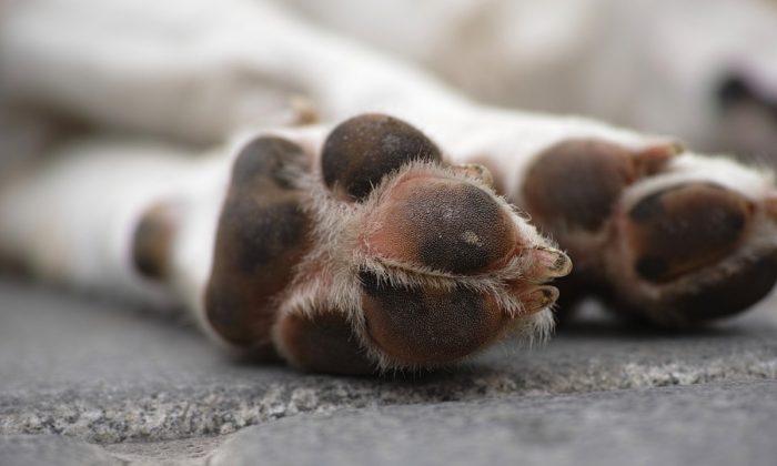 A dog's paws. (Engin_Akyurt/Pixabay)