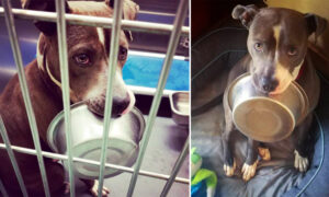 Shelter Dog Madly in Love With His Food Bowl Refuses to Be Adopted Without It