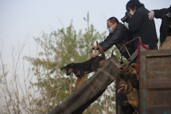 China dog rescue
