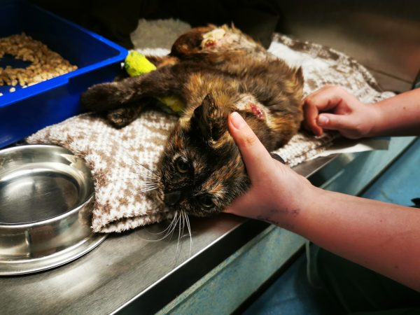 Sexually Abused, Burned Kitten Found Covered in Maggots and Dumped on Roadside