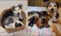 Mother Dog and 9 Puppies Found in Sealed Box in Garbage Dump