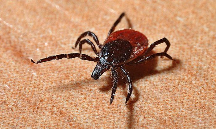 Stock image of a tick. (Jerzy Gorecki/Pixabay)