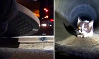 Kitten Trapped in Sewers Leads Rescuers on a Desperate Chase Under the Streets of Los Angeles