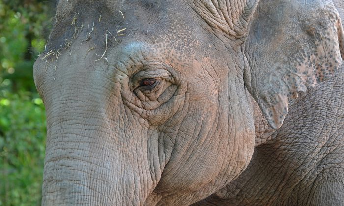 A stock photo of an elephant (Illustration - Shutterstock)