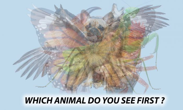 The First Animal You See in This Picture Will Reveal Hidden Aspects