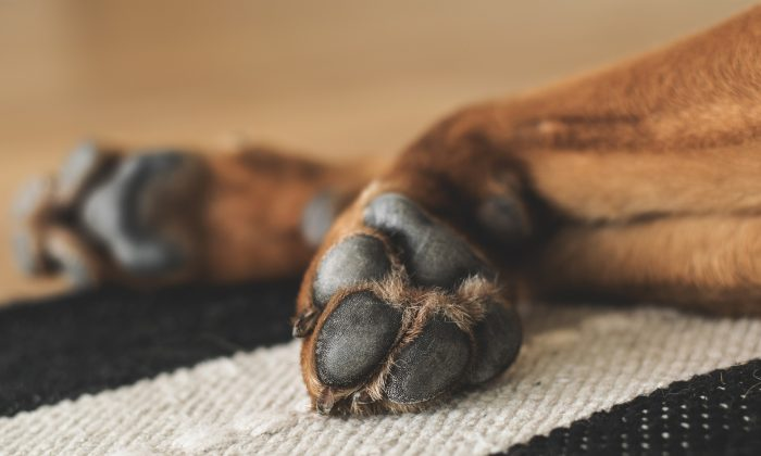 The pads of a dog's paws. (Pixabay)