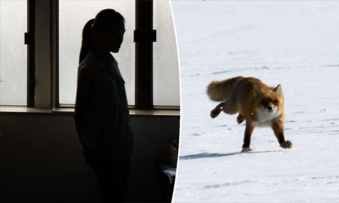 (L) A female student in China. (Anthony Wallace/AFP/Getty Images) -- (R) A fox on the run. (Takashi Noguchi/AFP/Getty Images)