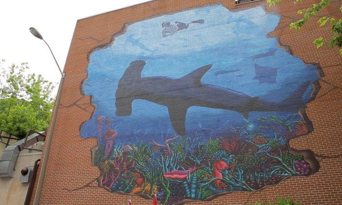 A mural of a hammerhead shark (NTDTV)